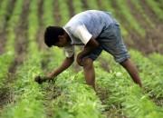 Procesaron a un productor agropecuario denunciado por trabajo esclavo