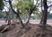 Parque Alberdi: el juez Sodero pidió informes al municipio