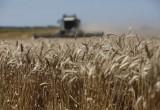 El Gobierno dejará sin efecto las restricciones para exportar maíz